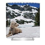 Traildog In Snow At Missouri Lakes Shower Curtain