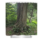 Trails Shower Curtain