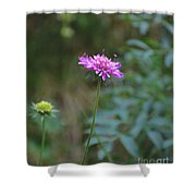 Tramonti Di Sotto Shower Curtain