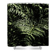 Tranquil Botanical Ferns Shower Curtain