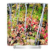 Tranquil Days Of Autumn Shower Curtain