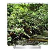 Tranquil Mountain Laurel Stream In The Great Smoky Mountains National Park Shower Curtain