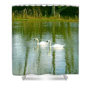 Tranquil Reflection Swans Shower Curtain