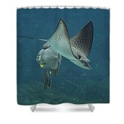Tranquil Sea Creatures Shower Curtain