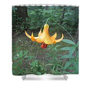 Tranquil Woods Shower Curtain