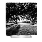 Tranquility Amongst The Oaks Shower Curtain
