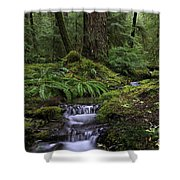 Tranquility In The Forest Shower Curtain