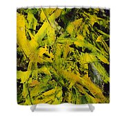 Transitions Vi Shower Curtain