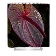 Translucent Beauty Shower Curtain