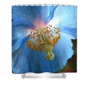 Translucent Blue Poppy Shower Curtain by Carol Groenen