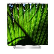 Translucent Green Shower Curtain
