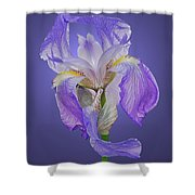 Translucent Iris Shower Curtain