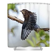 Translucent Juvenile Bluebird Shower Curtain