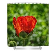 Translucent Poppy Shower Curtain