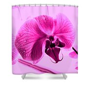 Translucent Purple Petals Shower Curtain