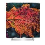 Translucent Red Oak Leaf Study Shower Curtain