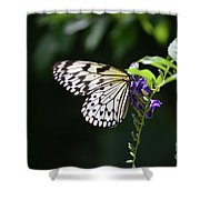 Translucent Wings On A Rice Paper Butterfly Shower Curtain