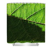 Transparence 20 Shower Curtain