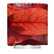 Transparence 23 Shower Curtain
