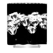 Transparence Shower Curtain