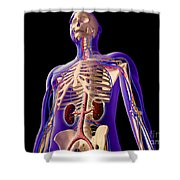 Transparent View Of Human Body Showing Shower Curtain