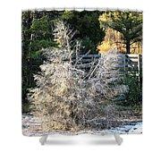 Travertine Tree Shower Curtain