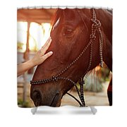 Treating From Depression With The Help Of A Horse Shower Curtain