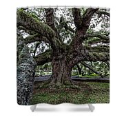Treaty Oak 12 14 2015 027 Shower Curtain