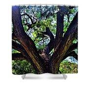 Tree 105 Shower Curtain