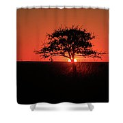 Tree A Glow Shower Curtain