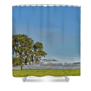 Tree Above The Clouds Shower Curtain