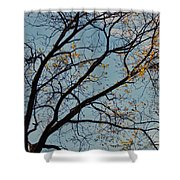 Tree Against The Sky Shower Curtain