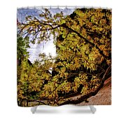 Tree Along Zion Riverside Walk Shower Curtain