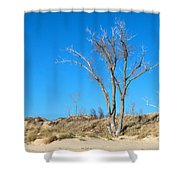 Tree And A Dune Shower Curtain