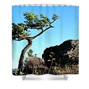 Tree And Rock Shower Curtain