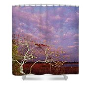 Tree And Sky At Cape May Point State Park  Nj Shower Curtain