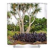 Tree And Succulents In Huntington Desert Gardens In San Marino-california Shower Curtain