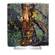 Tree And Vine Shower Curtain