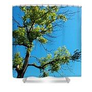 Tree Art 1 Shower Curtain