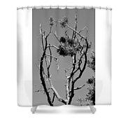 Tree Art Black And White 031015 Shower Curtain