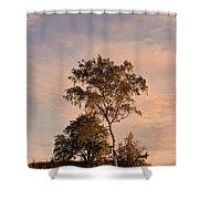 Tree At Dusk On Suomenlinna Island Shower Curtain