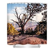 Tree At Moran Point Shower Curtain
