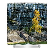 Tree At Picture Rock Cruise Shower Curtain