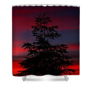 Tree At Sunset Shower Curtain