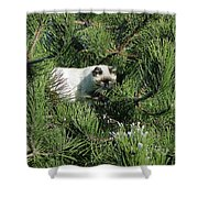 Tree Bandit Shower Curtain