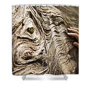 Tree Bark And Hand Shower Curtain