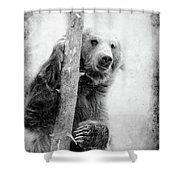 Tree Bear Shower Curtain
