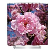 Tree Blossoming Pink Spring Blue Sky Baslee Troutman Shower Curtain