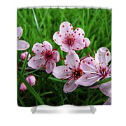 Tree Blossoms 4 Spring Flowers Art Prints Giclee Flower Blossoms Shower Curtain