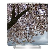 Tree Blossoms Landscape 11 Spring Blossoms Art Prints Giclee Sky Storm Clouds Shower Curtain